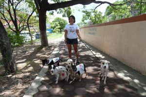 De paseo con los voluntarios - going for walks