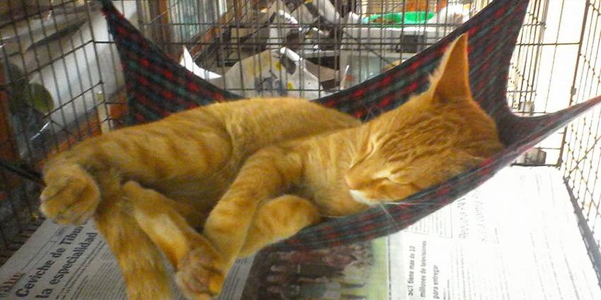Taking a siesta